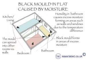Black mould in flat